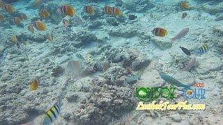 paket snorkeling dan diving di gili trawangan, meno, air, nanggu