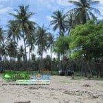 wisata pantai sire pulau lombok