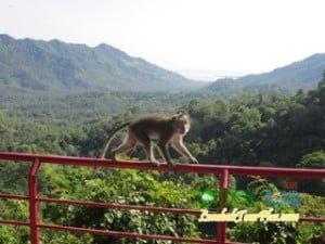 hutan wisata pusuk