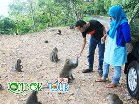 Singgah di Hutan Pusuk, Lombok Utara