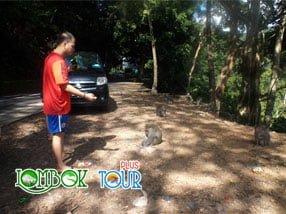 Objek Wisata Hutan Pusuk