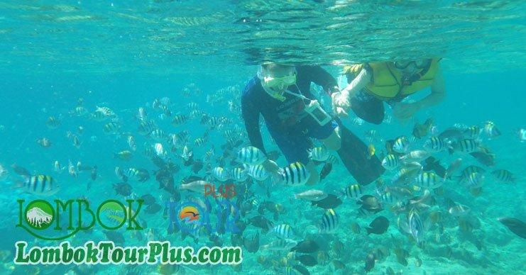 pemandangan bawah air snorkeling gili lombok