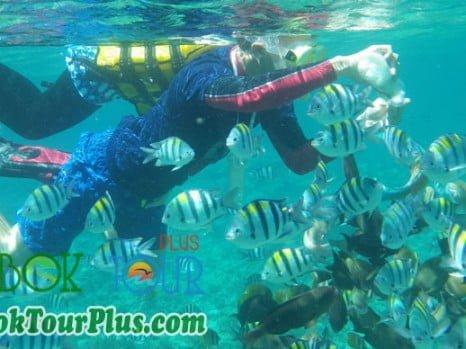 snorkeling di gili lombok