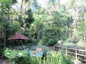 Wisata Taman Suranadi Pulau Lombok