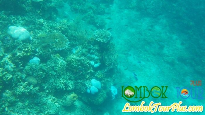 Yuk Intip Keindahan dan Keeksotisan Gili Lampu Lombok