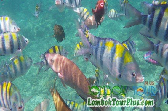 gili air bawah laut