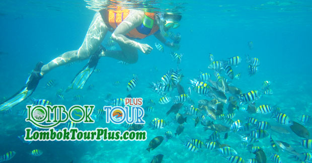 Serunya Snorkeling Di Wisata Lombok