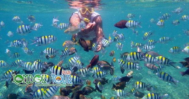 Keindahan Taman Bawah Laut Gili Air Lombok