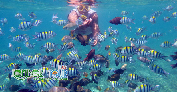 Ini Dia Objek Wisata di Lombok Yang Mengesankan