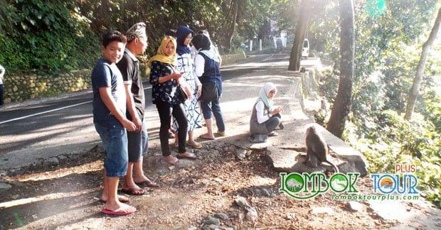 Wisata Hutan Pusuk Lombok